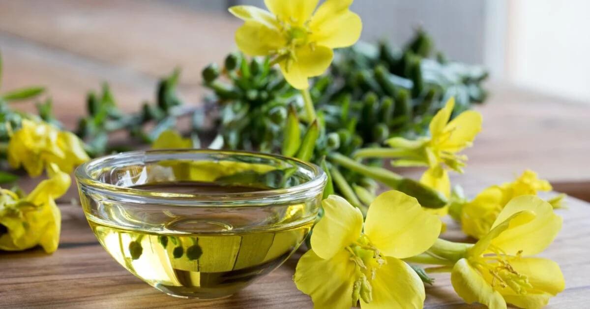 tinh dầu hoa anh thảo hỗ trợ mang thai, tinh dầu hoa anh thảo giúp thụ thai, uống tinh dầu hoa anh thảo nhanh có thai, tinh dầu hoa anh thảo tăng khả năng thụ thai webtretho